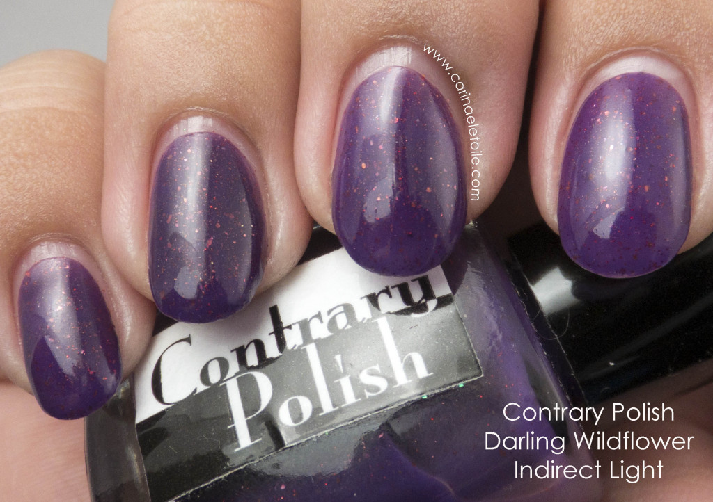 Contrary Polish Darling Wildflower Indirect Light
